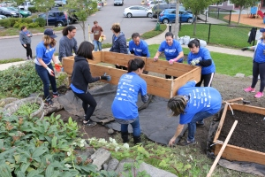 Two garden beds were drilled together and then carefully placed down in their new locations.